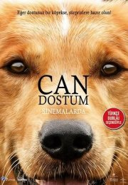 Can Dostum – A Dogs Purpose 2017